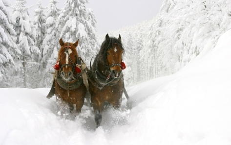 winter white frozen horses snow white sleds 1920x1200 wallpaper_wallpaperswa.com_75