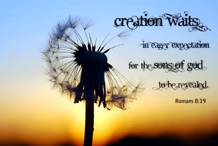 creation waits